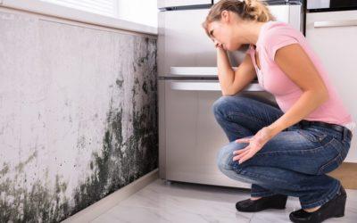 4 stappen om een schimmelprobleem in uw huis op te lossen